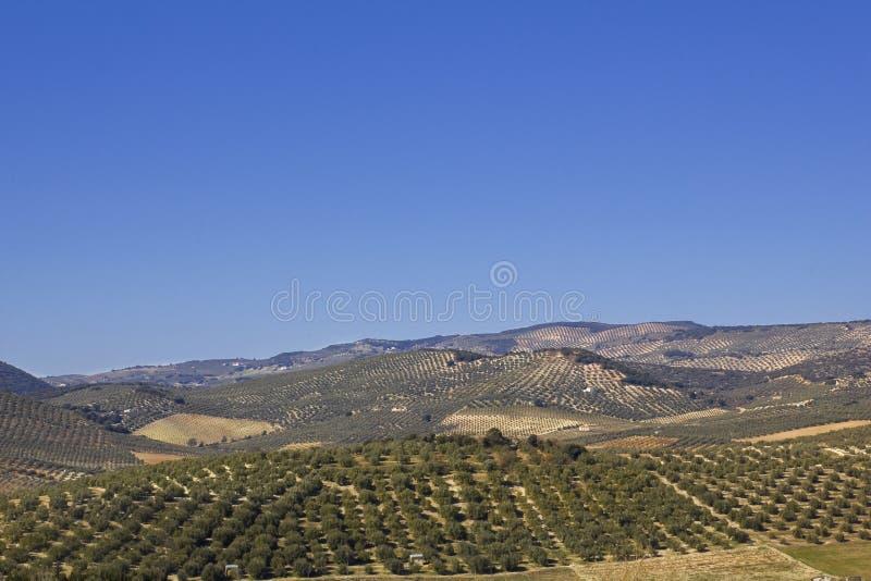 Panorama van de gebieden in Andalusia. royalty-vrije stock foto