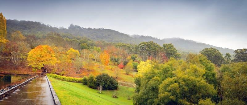 Panorama van de herfstbomen royalty-vrije stock foto