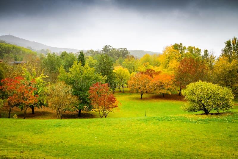 Panorama van de herfstbomen in Australië stock afbeeldingen