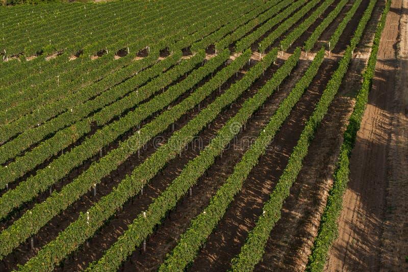 Panorama van de wijngaardengebieden royalty-vrije stock afbeelding