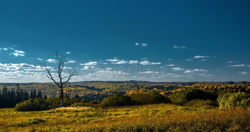 Panorama van droge boom en het boswerkingsgebied, met blauwe hemel royalty-vrije stock afbeelding
