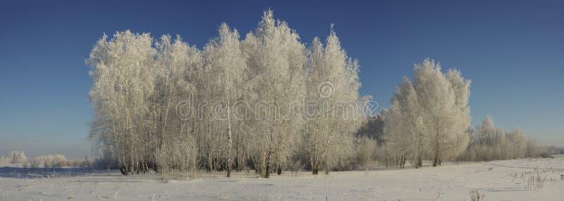 Panorama van een de winterbos op een zonnige dag tegen een blauwe hemel stock afbeelding