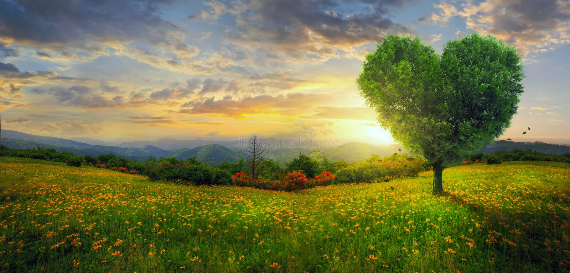 Panorama van een hartboom stock fotografie