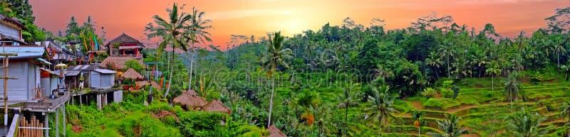 Panorama van een landschap op Bali Indonesië bij zonsondergang stock foto's