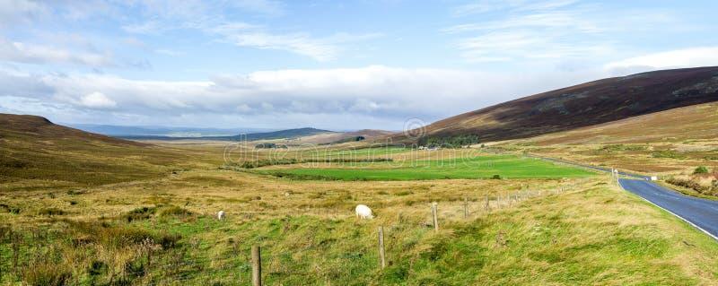 Panorama van een mooi de herfstlandschap met het weiden sheeps in het nationale park van Cairngorms, Schotland stock fotografie