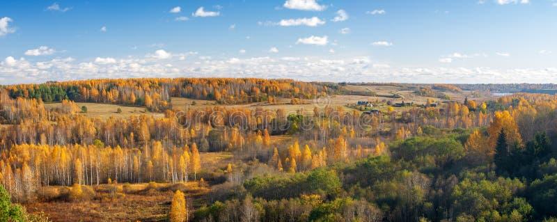 Panorama van een mooi herfstbos royalty-vrije stock foto's