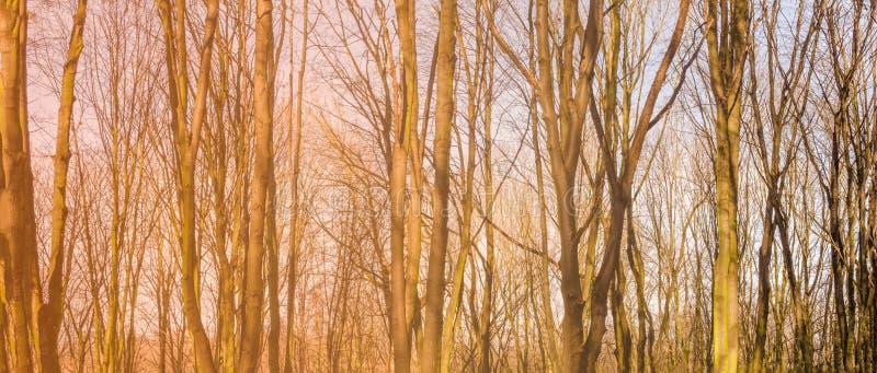 Panorama van een voorjaarsbos royalty-vrije stock afbeelding