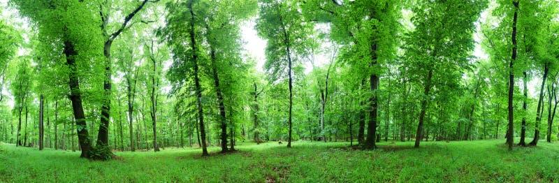 Panorama van groen bos bij de lentelandschap stock afbeeldingen