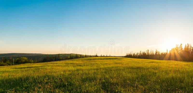 Panorama van groene weide bij zonsondergang stock afbeeldingen