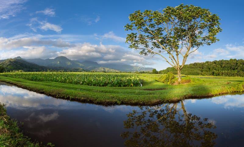 Panorama van Hanalei-Vallei in Kauai stock foto
