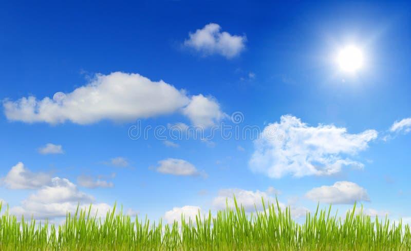 Panorama van hemelzon en gras stock foto