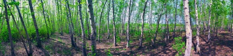 Panorama van het bos stock foto's