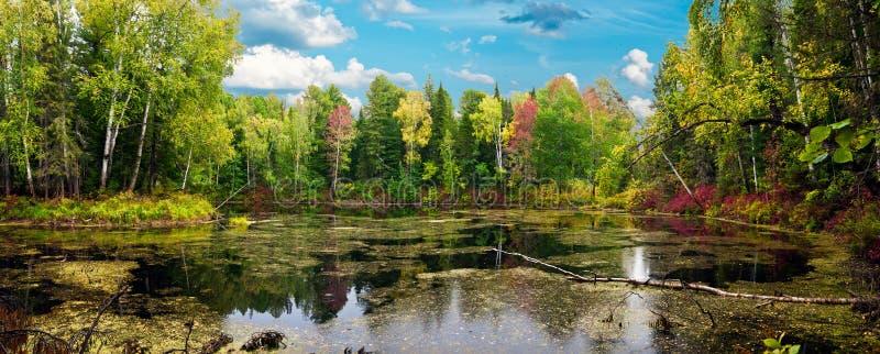 Panorama van het de herfsthout stock foto