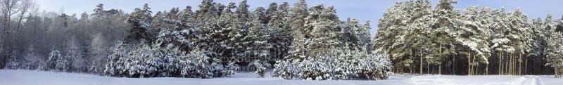 Panorama van het de winterbos stock fotografie