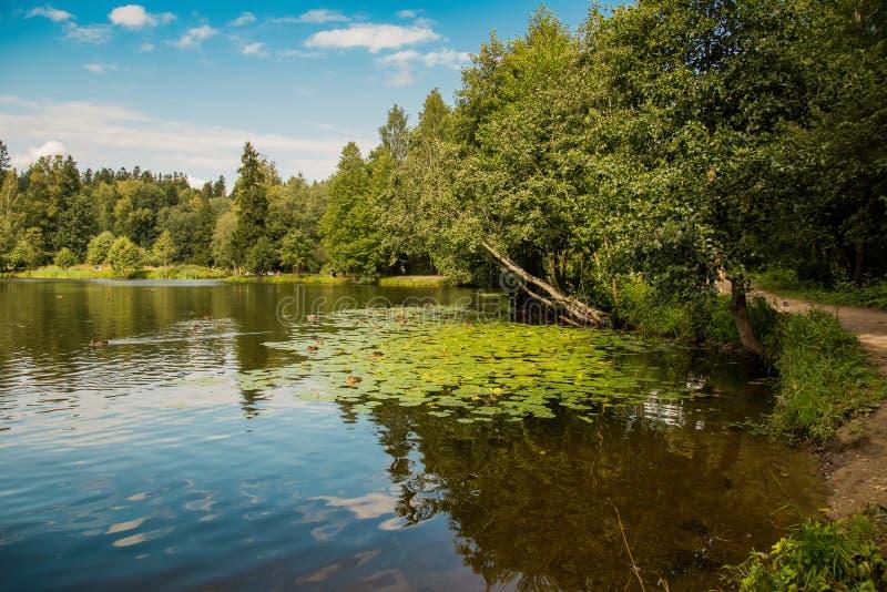 Panorama van het de Zomerpark met een mooie bezinning van het water royalty-vrije stock afbeeldingen