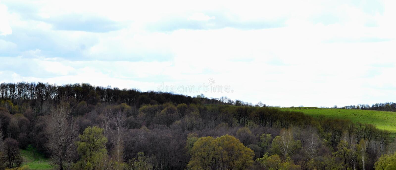 Panorama van het landelijke landschap in de vroege zomer royalty-vrije stock afbeelding