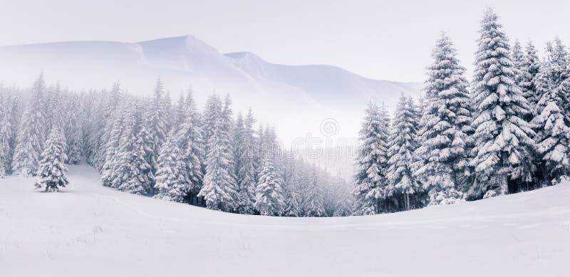 Panorama van het mistige de winterlandschap royalty-vrije stock afbeelding
