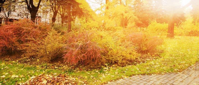 Panorama van kleurrijke bomen in een park in de herfst, een levendig landschap met de zon die door het gebladerte glanzen stock afbeeldingen