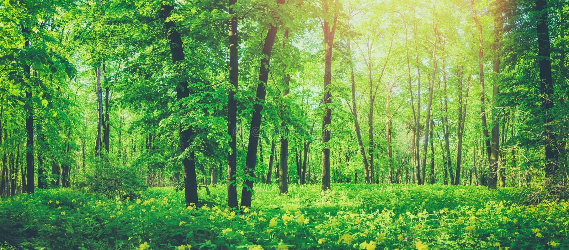 Panorama van mooi groen boslandschap in de zomer stock foto