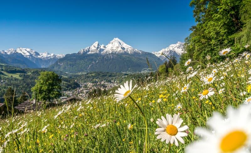 Panorama van mooi landschap in de Beierse Alpen met mooie bloemen en beroemde Watzmann-berg stock fotografie