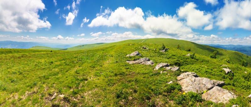 Panorama van mooie Karpatische alpiene weiden royalty-vrije stock afbeeldingen