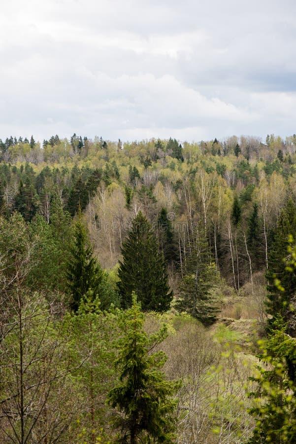 Download Panorama Van Nevelig Regenwoud Stock Foto - Afbeelding bestaande uit panorama, toneel: 54077808