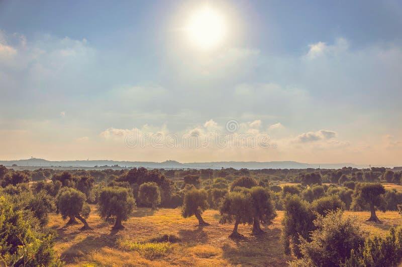 Panorama van olijfbomenvlakte voor Ostuni stock foto