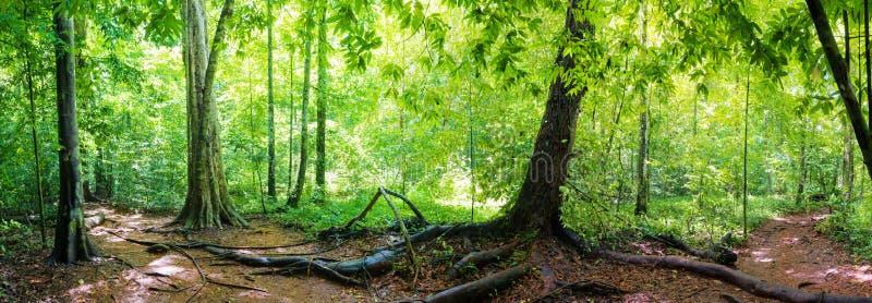 Panorama van regenwoud royalty-vrije stock foto