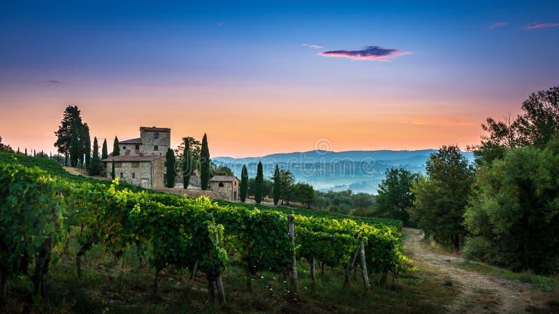 Panorama van Toscaanse die wijngaard in mist bij de dageraad dichtbij Castellina in Chianti, Italië wordt behandeld royalty-vrije stock foto's