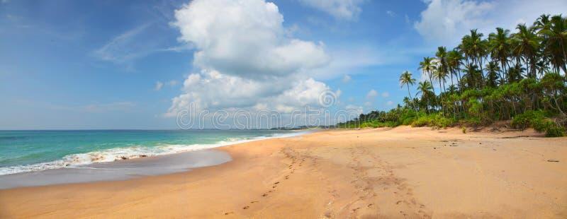 Panorama van verlaten strand met voetafdrukken en weelderige palmen stock afbeelding