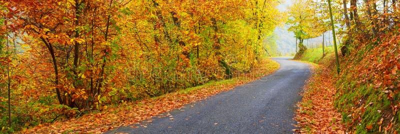 Panorama van weg in de herfst stock afbeelding