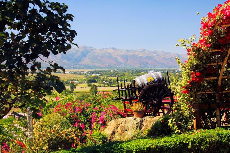 Panorama van wijngaard op heuvelbovenkant voorbij bloemen en wijnvat in groene vallei van dorp Nyaungshwe en bergketen stock afbeeldingen
