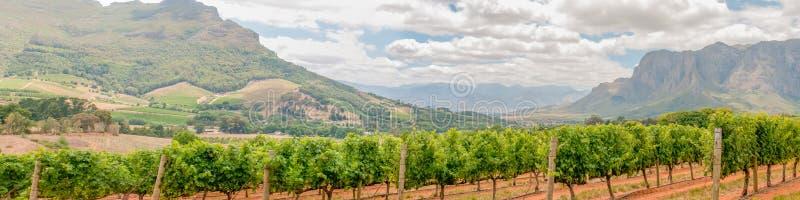 Panorama van wijngaarden dichtbij Stellenbosch royalty-vrije stock foto