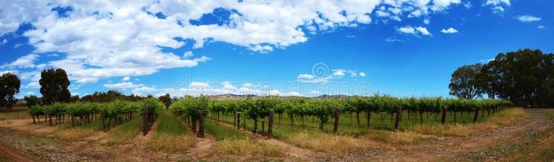 Panorama van wijngaardenrijen met blauwe hemel stock foto