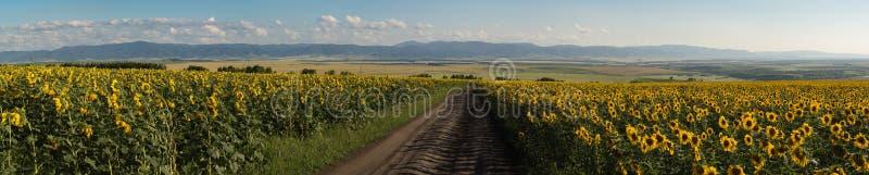Panorama van zonnebloemenweide, weg tussen, bergen, gebieden en stad op het achterplan royalty-vrije stock foto