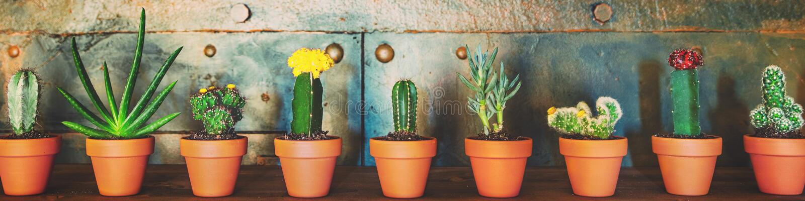 Panorama, various sorts of cactus plants in a row, metallic background stock photo