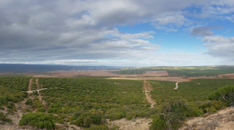 Panorama of vast African bushveld landscape on sunny day. Nature background royalty free stock images