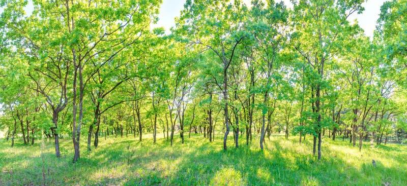 Panorama vert de forêt images stock