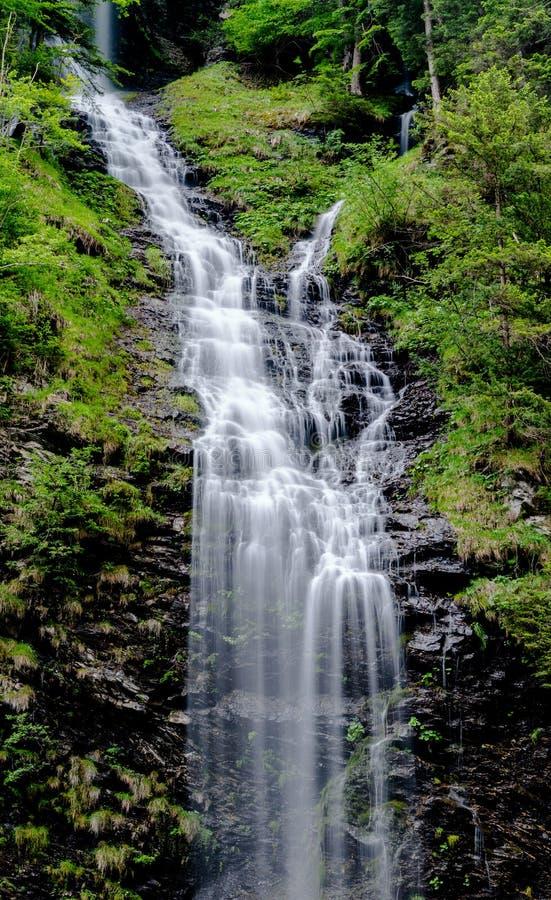 Panorama vertical de haute cascade pittoresque dans le paysage vert luxuriant de forêt photo stock