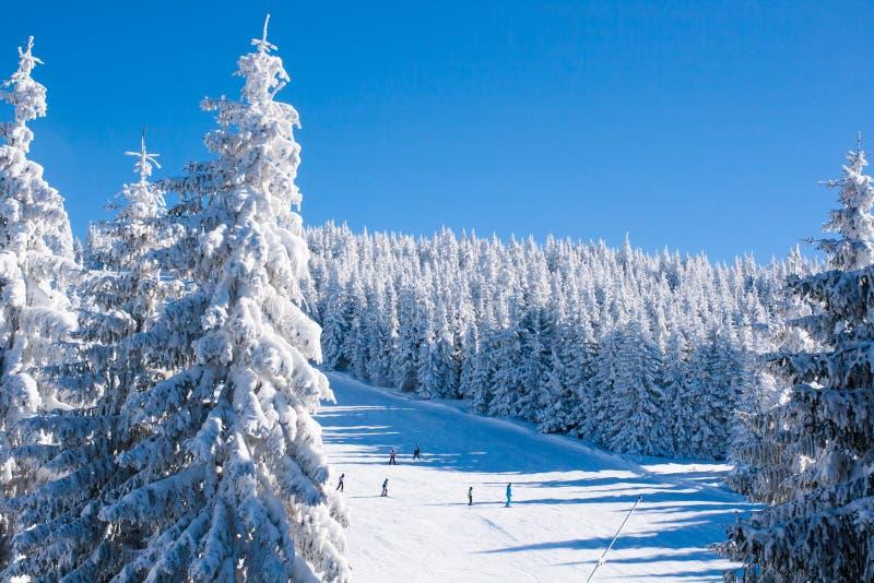 Panorama vibrant de la pente à la station de sports d'hiver Kopaonik, Serbie, les gens skiant, arbres de neige, ciel bleu images stock
