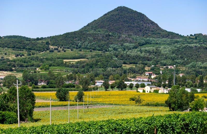 Panorama view of Colli Euganei, sunflower fields, Italy royalty free stock photo