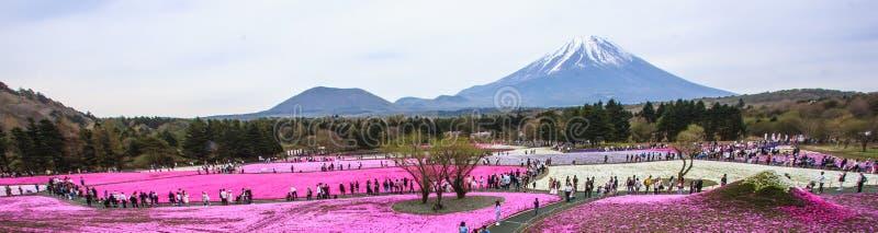 Panorama view of moss phlox fields in Shiba-sakura Festival stock photography
