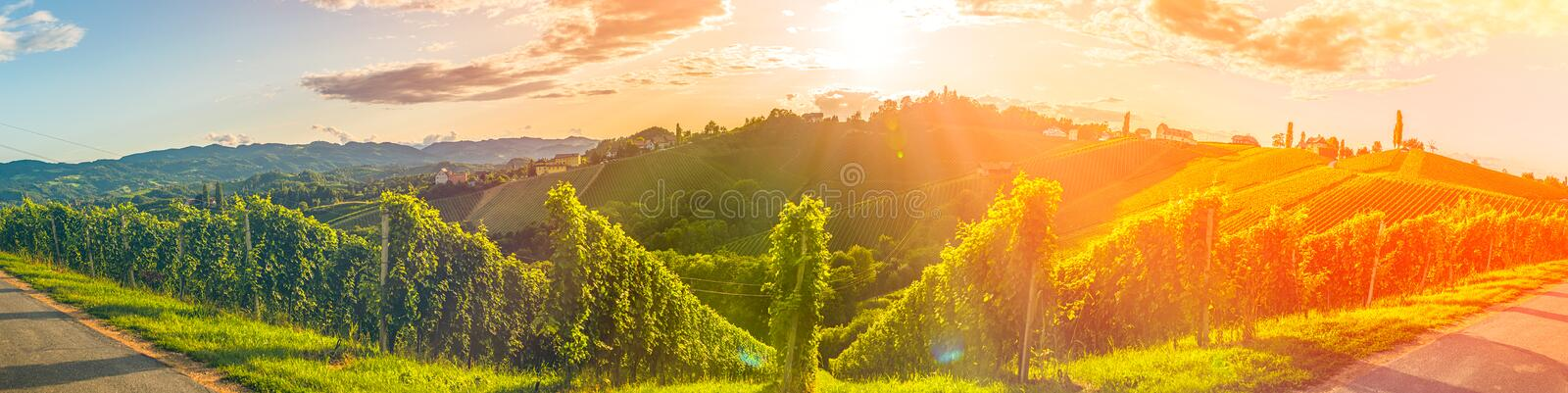 Panorama view of Vineyards in summer in south Styria, Austria tourist spot, travel destination. Famous places in Europe stock photos
