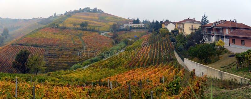 Panorama von Herbstweinbergen lizenzfreie stockbilder