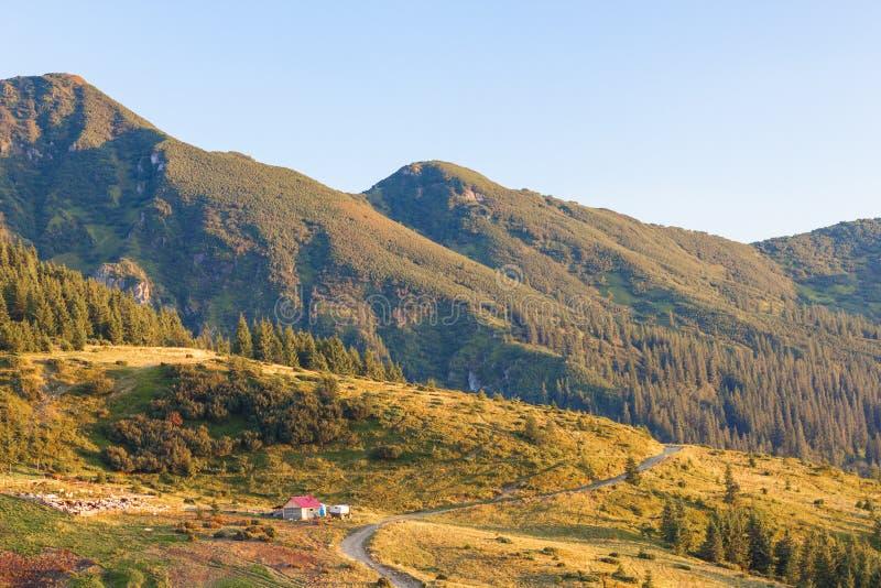 Panorama von Karpatenbergen am sonnigen Tag des Sommers lizenzfreies stockfoto