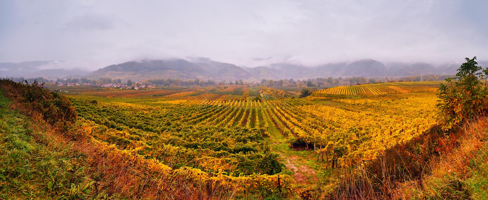 Panorama of Wachau valley. Colorful autumn in vine yards stock image