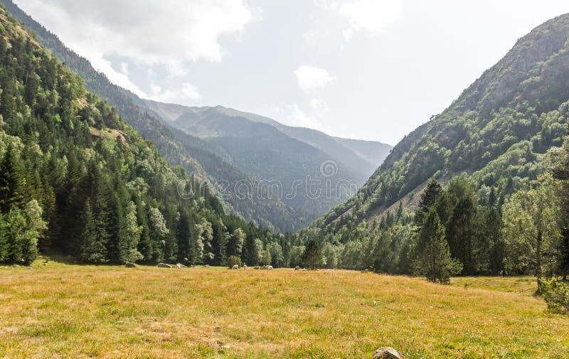 Panorama walley w Pyrenees Stado krowy pasa w śliwkach De Boavi; w prowincji Lleida, Catalonia, Hiszpania fotografia royalty free