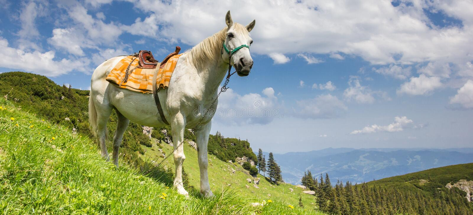 Panorama of a white horse in the Carpathian mountains stock photos