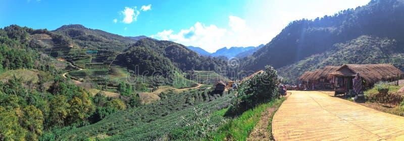 Panorama widok piękny herbaty gospodarstwo rolne i plemienny rynek zdjęcia royalty free