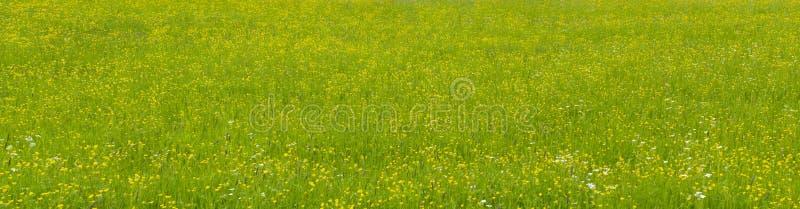 Panorama widok zielenieć łąkę fotografia royalty free